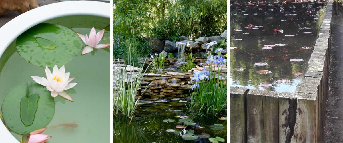 jardin aquatique et bassin hors-sol et jardin aquatique en pot