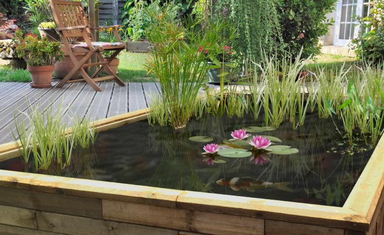 Le spécialiste de l\'écosystème domestique - Jardins aquatiques et ...